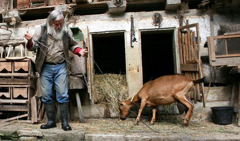 Naturtalente: Neben Schafen und Federvieh gehören auch acht Ziegen zu Frank Dählings Mühlen-Arche
