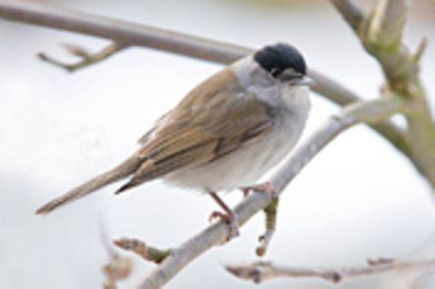 Zugvögel: Warum in die Ferne schweifen?