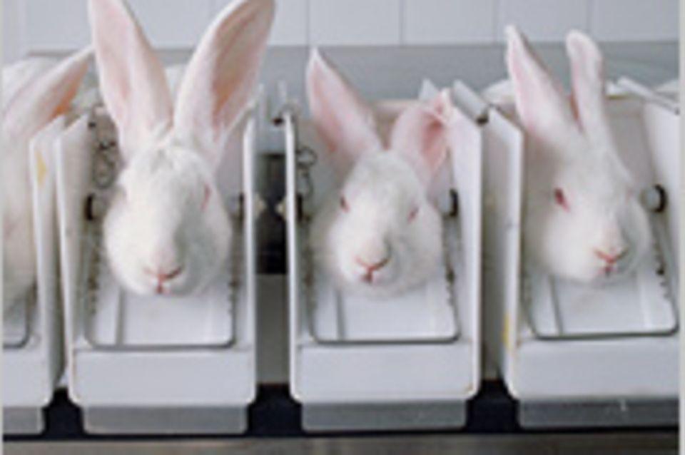 Tierversuche: Schönheit ohne Tierleid