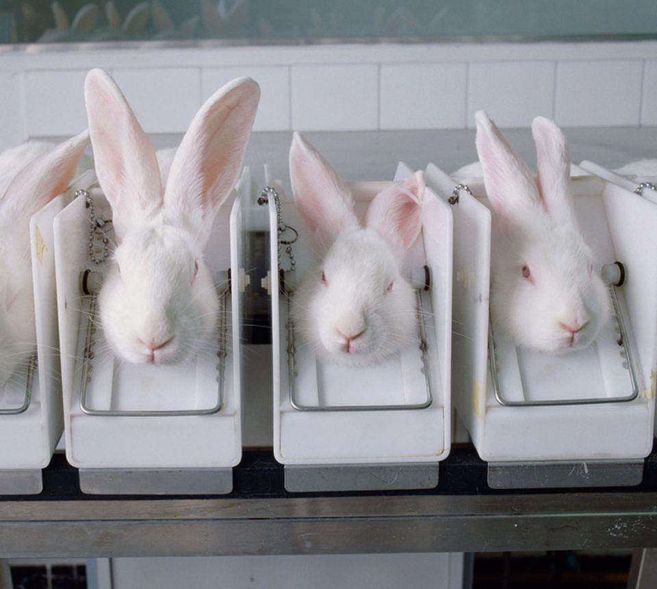 Tierversuche: Modetrends contra Tierschutz: Obwohl es bereits viele Schönheits- und Körperpflegeprodukte gibt, forscht die kosmetische Industrie weiter an neuen chemischen Wirkstoffen - in Tierversuchen