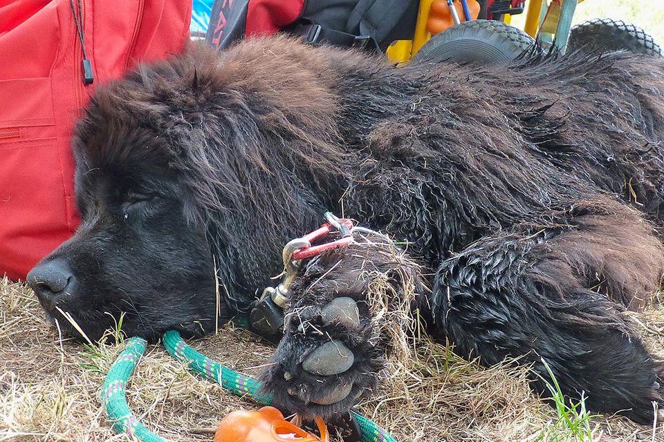 Die Rettungshunde vom Gardasee