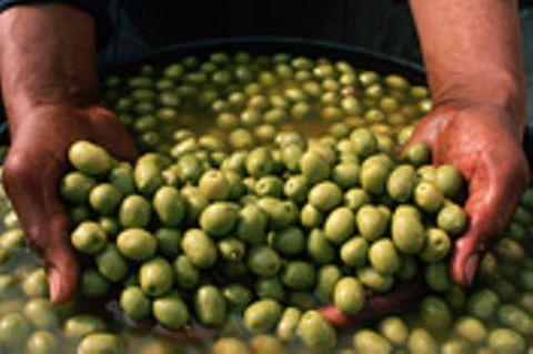 Mosel: Olivenhaine am Südhang
