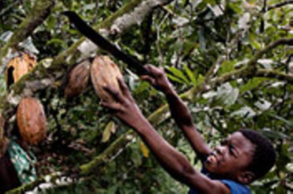 Kinderarbeit: Kinderarbeit: Bitterer Beigeschmack