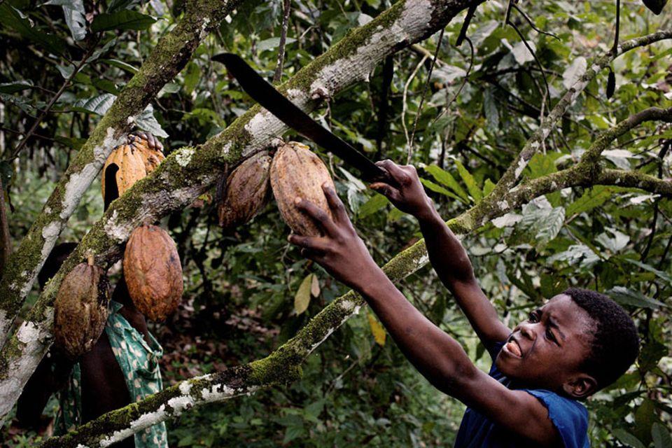 Kinderarbeit: Mehr als 90 Prozent des deutschen Kakaobedarfs decken die Länder Westafrikas, allen voran Ghana und Elfenbeinküste. Verbreitet werden hier Kinder als billige oder kostenlose Arbeitskräfte eingesetzt