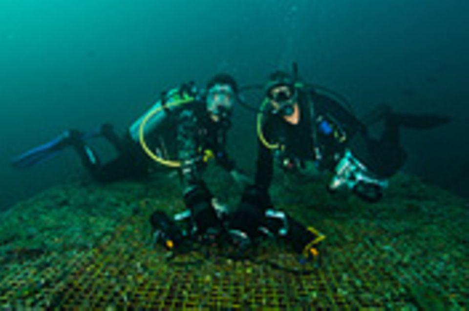 Stress unter Wasser