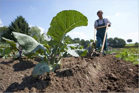"""Ökolandbau: """"Grünes"""" Wachstum: Investitionen in Ökolandbau zahlen sich aus"""