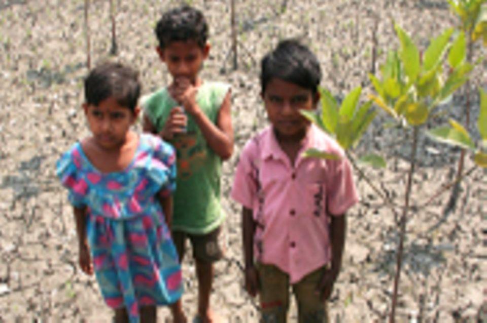 Indien: Mangrovenschutz in den Sundarbans (2012-2017)