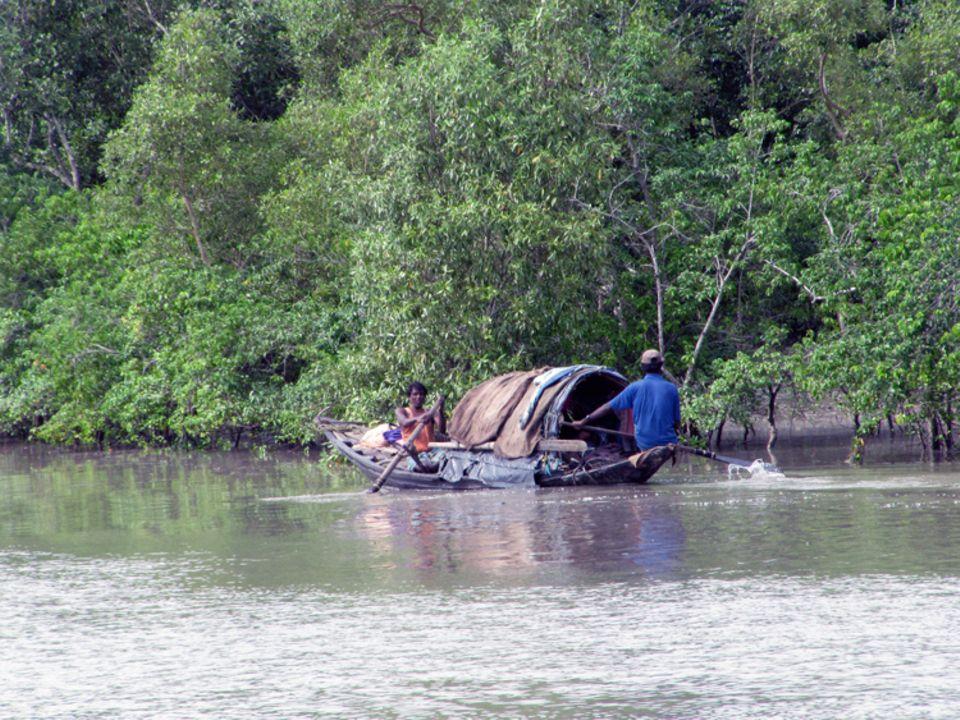 Indien: Mangroven bieten flachen Inseln wie Satjalia Schutz bei Naturkatastrophen