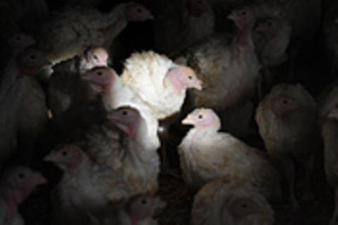 """Massentierhaltung: Antibiotika in der Tiermast: """"Viertel nach zwölf"""""""