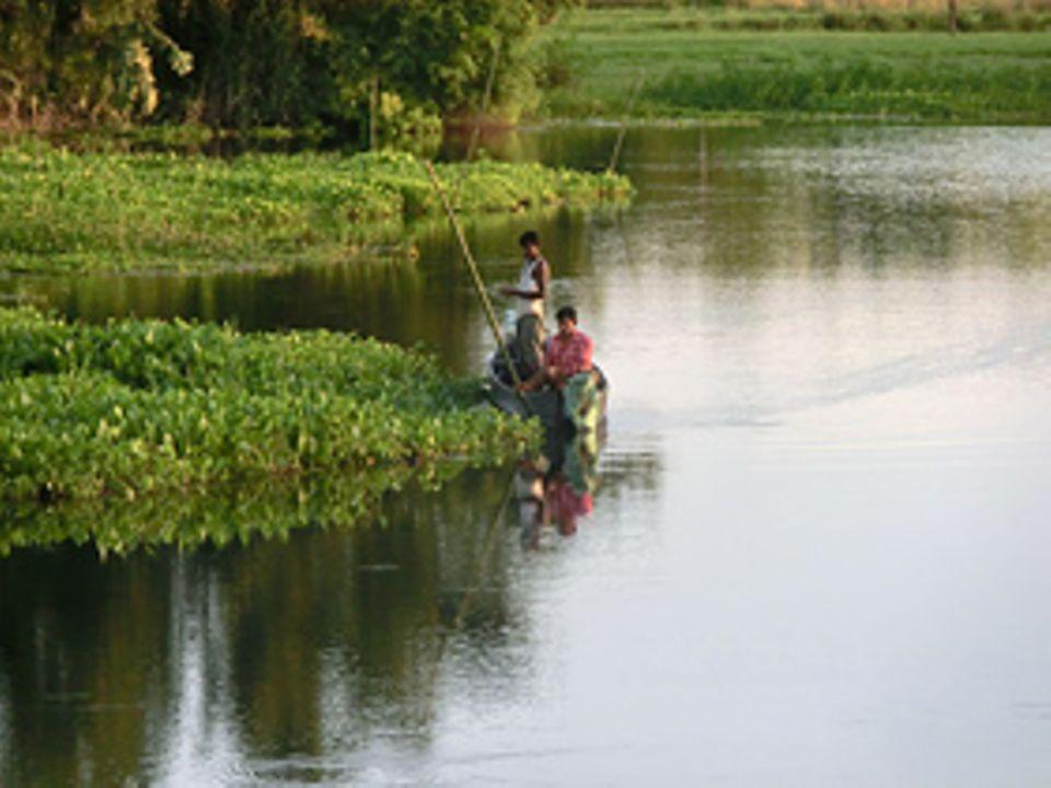 In den letzten 60 Jahren hat die Insel Majuli rund ein Drittel ihrer Fläche verloren. Kontinuierlich nagt der Brahmaputra an den Ufern