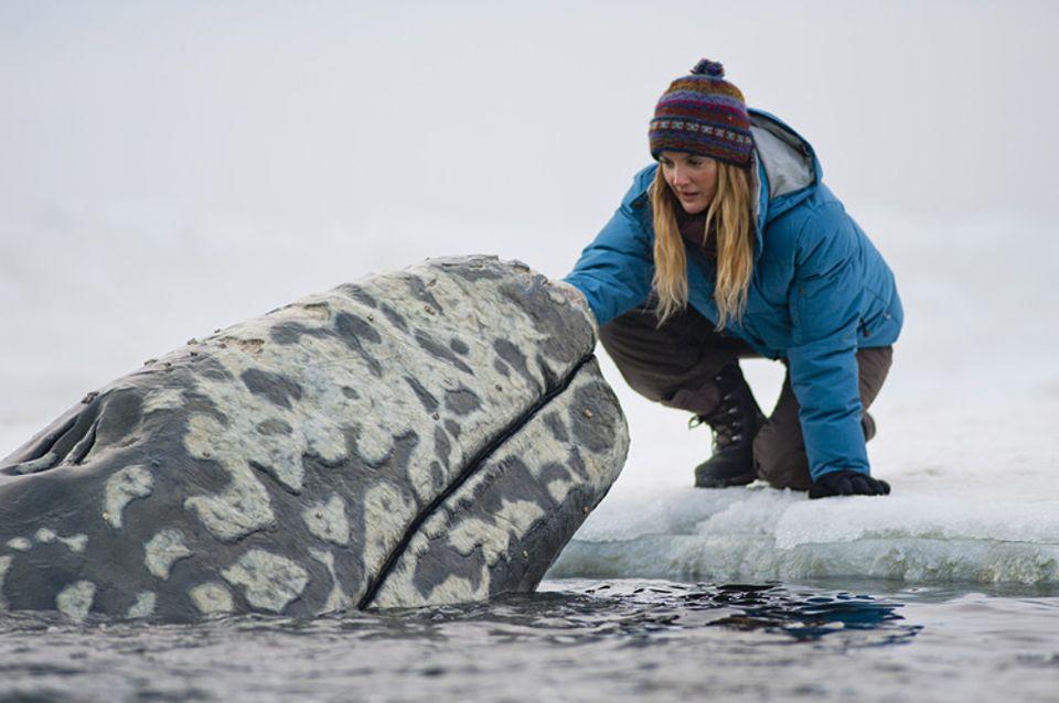 Kinotipp: Die Umweltschützerin Rachel setzt sich für die Wale ein