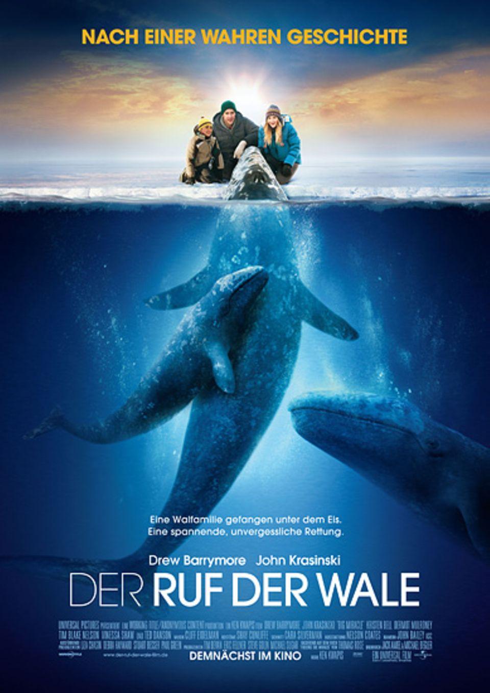 Kinotipp: Seit dem 16. Februar im Kino: Der Ruf der Wale