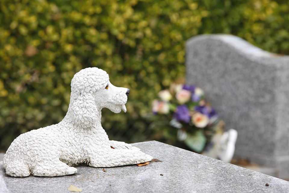 """Redewendung: Die Redewendung """"da liegt der Hund begraben"""" hat gleich zwei Bedeutungen"""