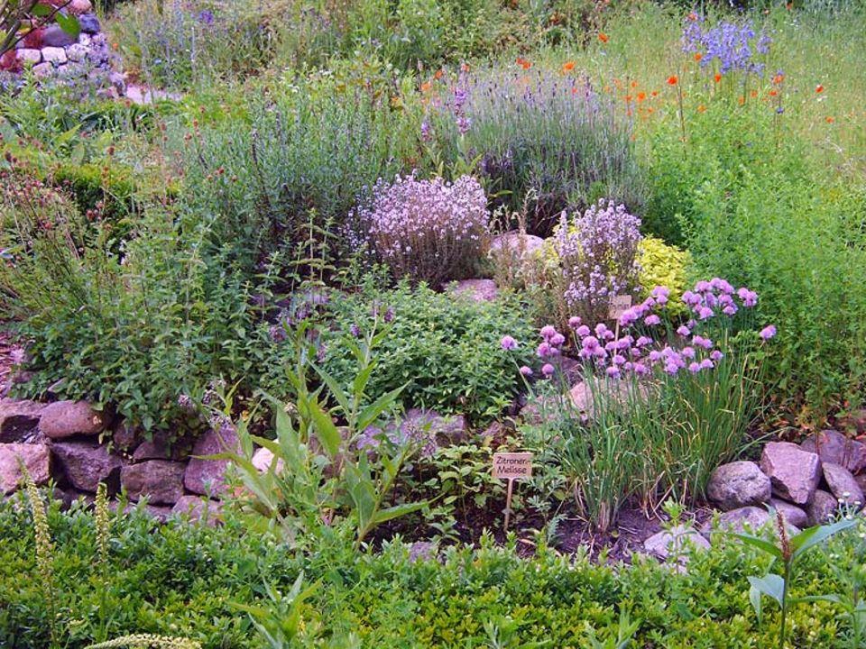 Naturgärten: In der Kräuterspirale gedeihen Küchenkräuter mit verschiedenen Ansprüchen, von denen auch Insekten profitieren