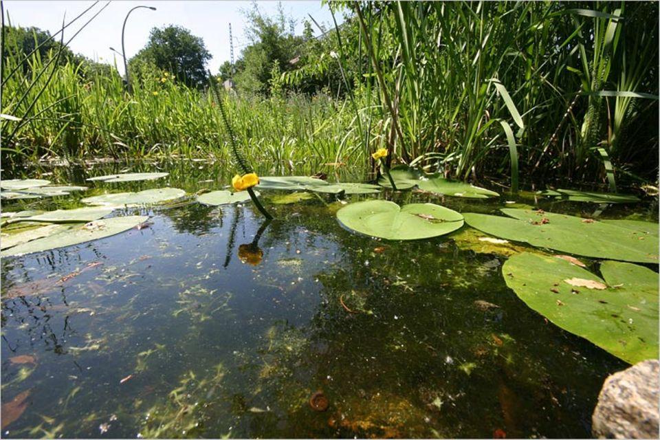 Naturgärten: Wasser wertet jeden Garten auf - und zieht Tiere magisch an