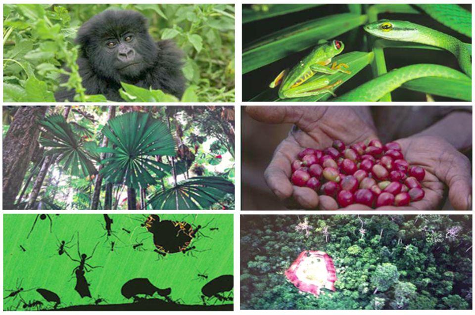 Grüße aus dem Regenwald