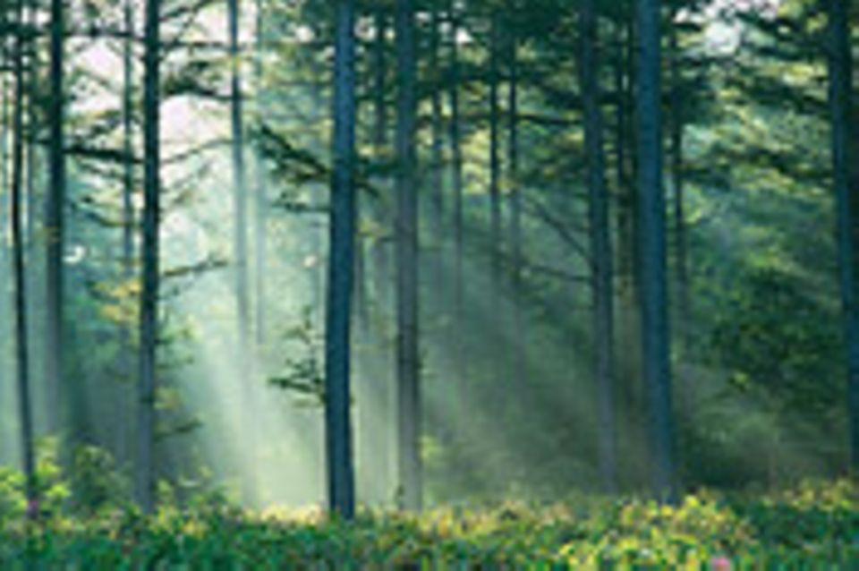 Bitte Ruhe für den Wald