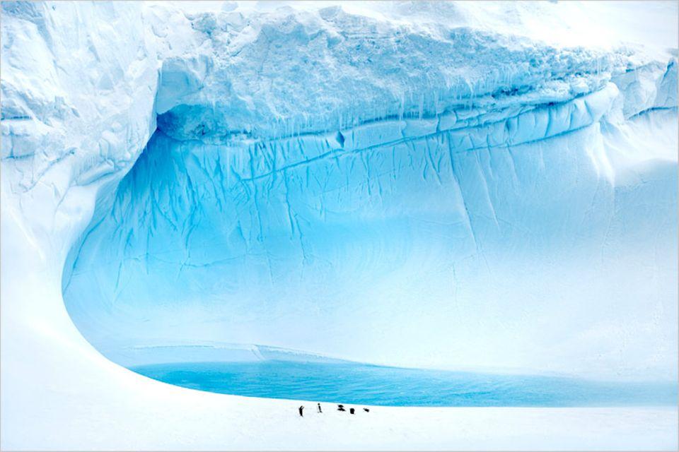 Gegen die riesigen Eismassen wirken die Pinguine richtig winzig