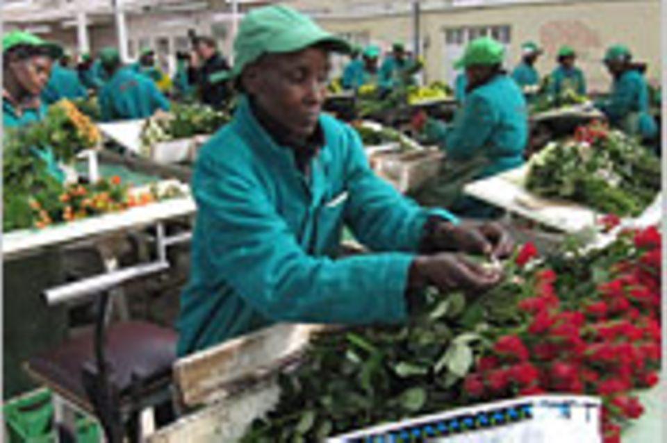 Fairer Handel treibt Blüten