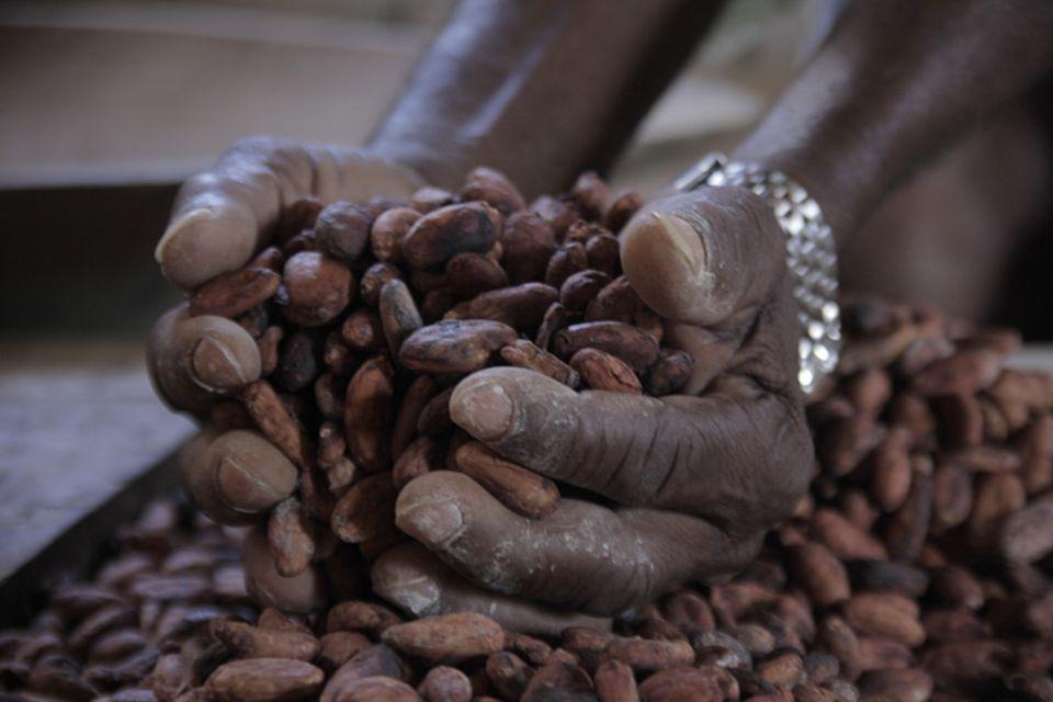 """Er macht dem Namen """"Theobroma Cacao"""", der """"Speise der Götter"""" alle Ehre: Cakao Nacional aus Ecuador"""