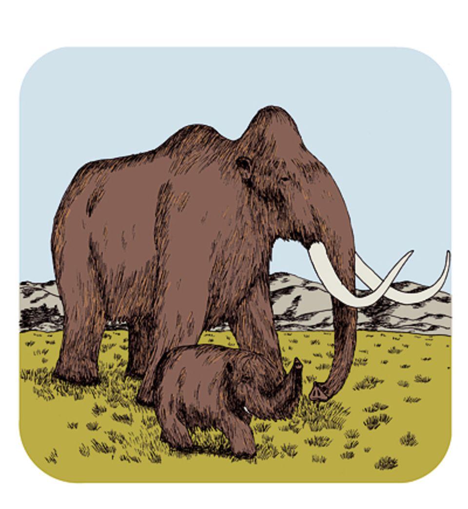 Das Wollhaarmammut starb vor 15.000 Jahren aus