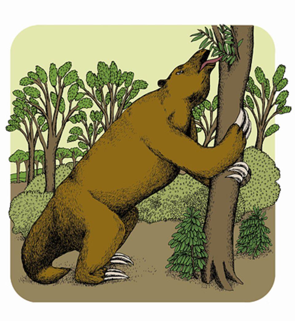 Ein Riesenfaultier gab es zuletzt vor 10.000 Jahren