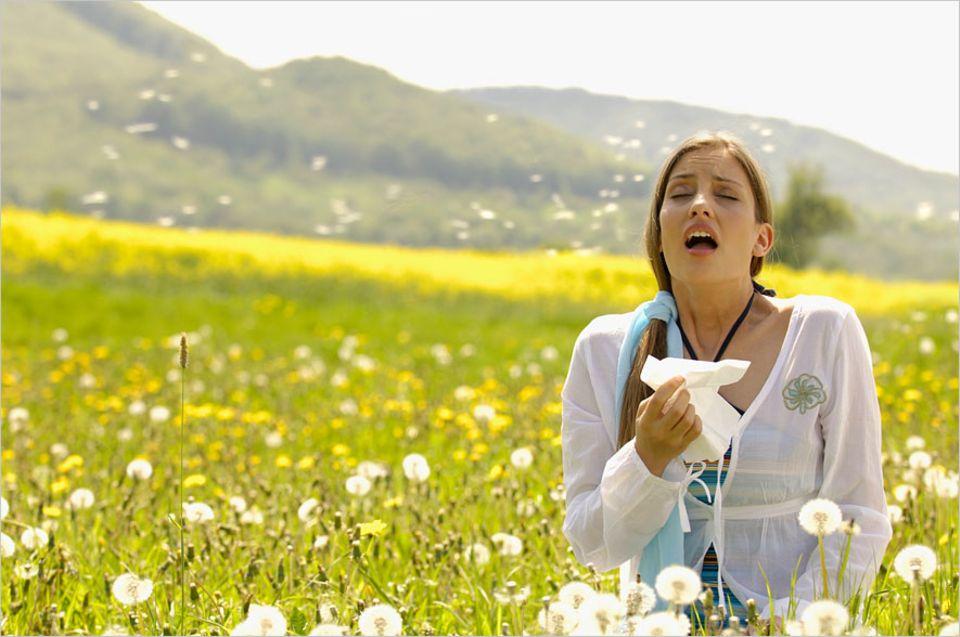 Allergien: Heuschnupfen - neben einer Vielzahl von Erbanlagen sind immer auch Umweltfaktoren beteiligt
