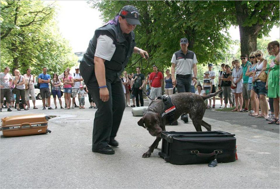 Berrys Kollege Lord, der in Wien arbeitet, wurde vom Tiergarten Schönbrunn gesponsert. Hier seht ihr ihn beim Einsatz vor Publikum