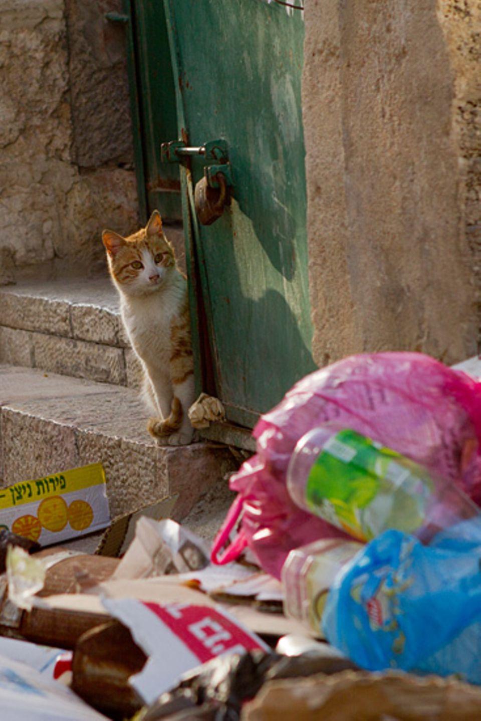 Zahlreiche Katzen durchwühlen den Müll in Jerusalems Altstadt, der meist offen auf der Straßen liegt. Mülltrennung gibt es hier keine