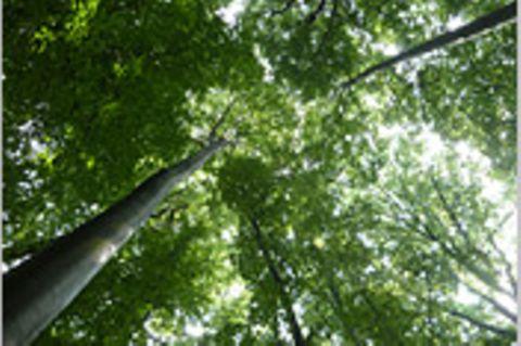 Umweltpolitik: Streit um den Wald