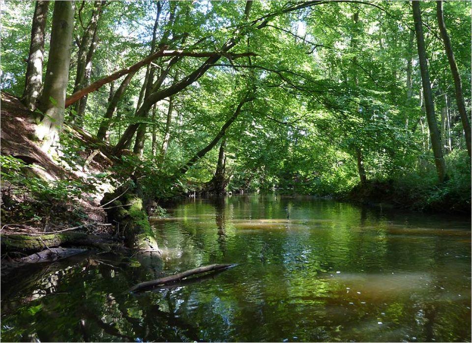 Umweltpolitik: Idyllisch fließt die Bille, ein Nebenfluss der Elbe, am Sachsenwald entlang. Das Tal steht unter Naturschutz