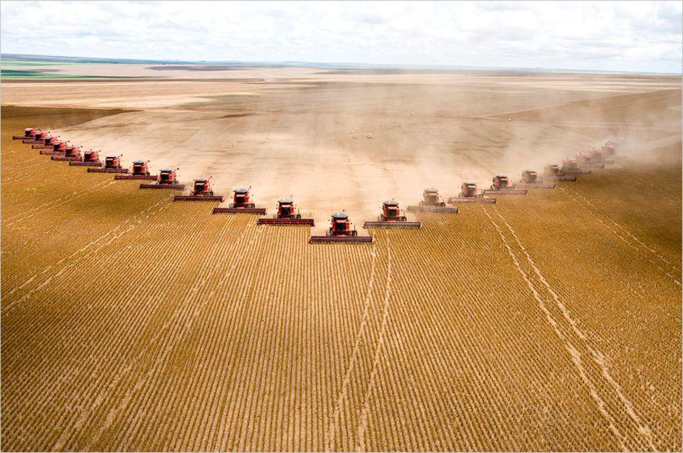 Lebensmittelproduktion: Sojaernte in Brasilien: Auf Millionen Hektar wird eiweißreiches Kraftfutter angebaut, um in Europa und China billig, schnell und in großen Mengen Fleisch produzieren zu können