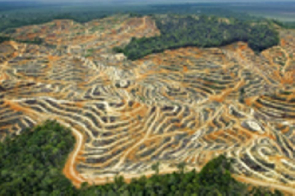 Lebensmittelproduktion: Umweltzerstörung: Plantage statt Regenwald