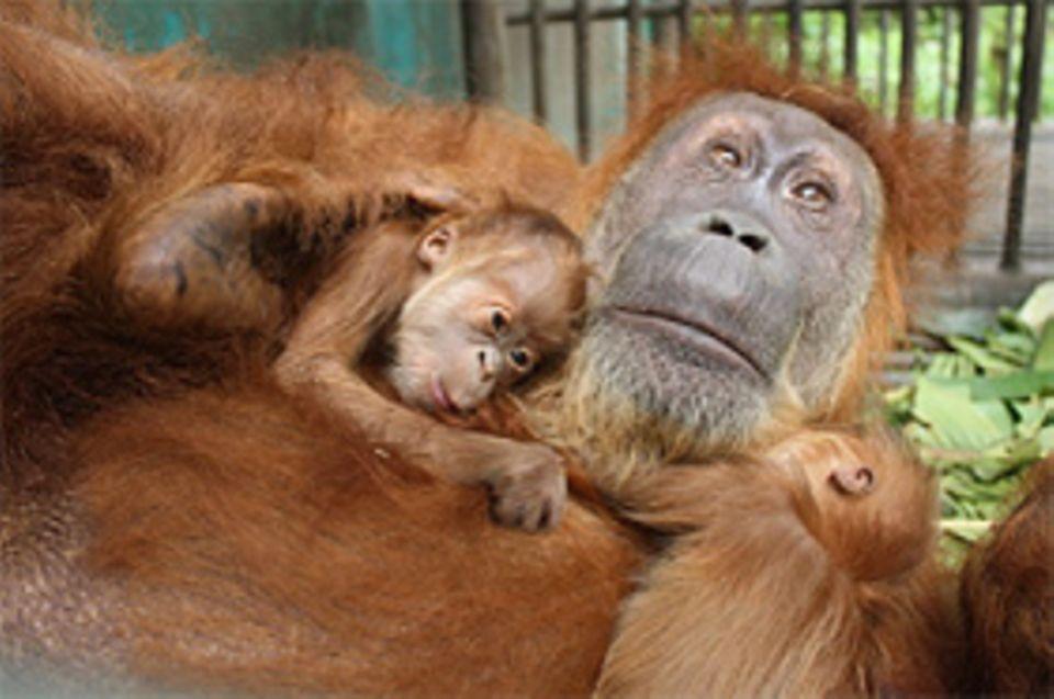 Gober kann ihre Zwillinge Ganteng und Ginting nun endlich das erste Mal sehen