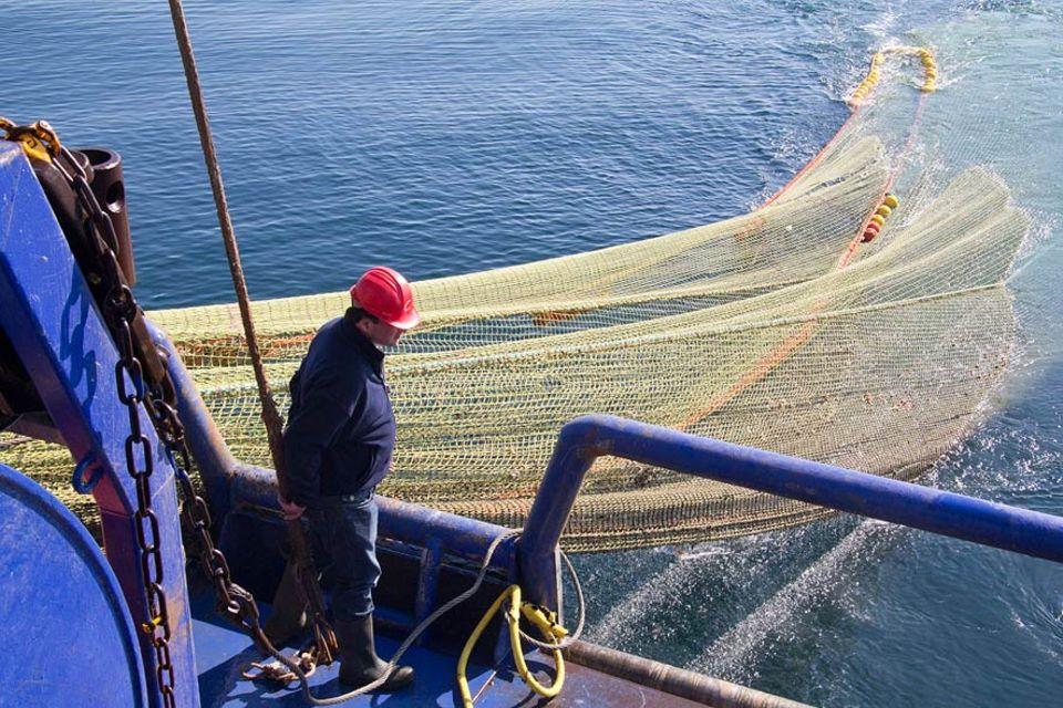 """""""Wir haben mit den neuen Netzen den Beifang von 50 auf unter zehn Prozent gesenkt"""", sagt Fischer de Boer"""
