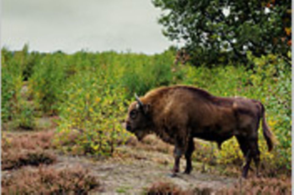 Naturschutz: Mehr Wildnis wagen!