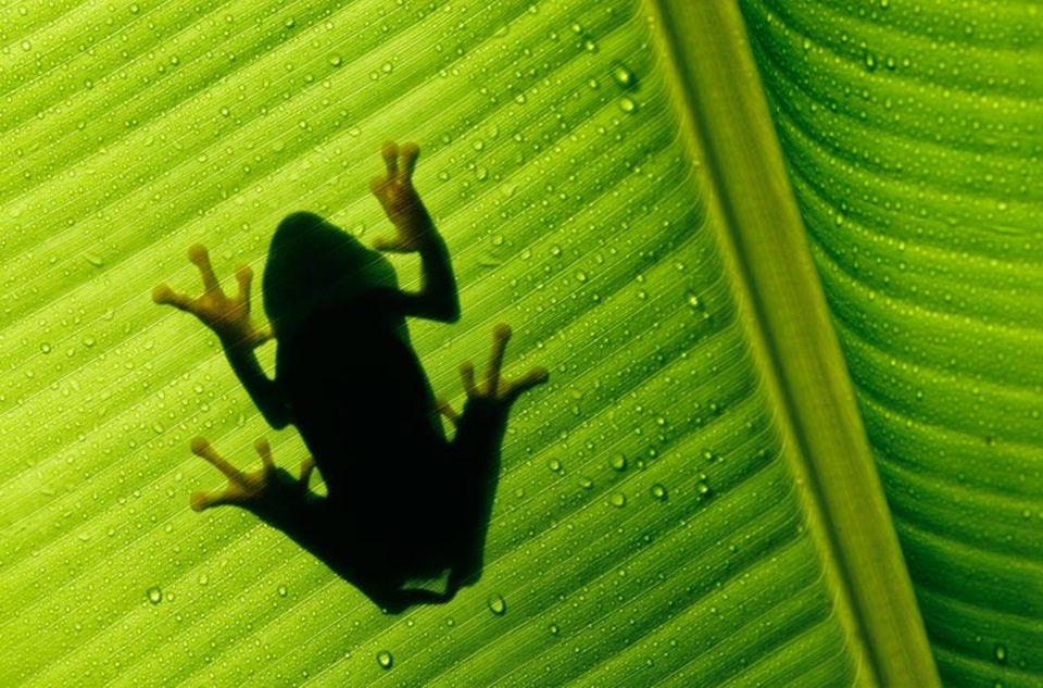Ob dieser Frosch wohl zu einer neu entdeckten Art gehört?