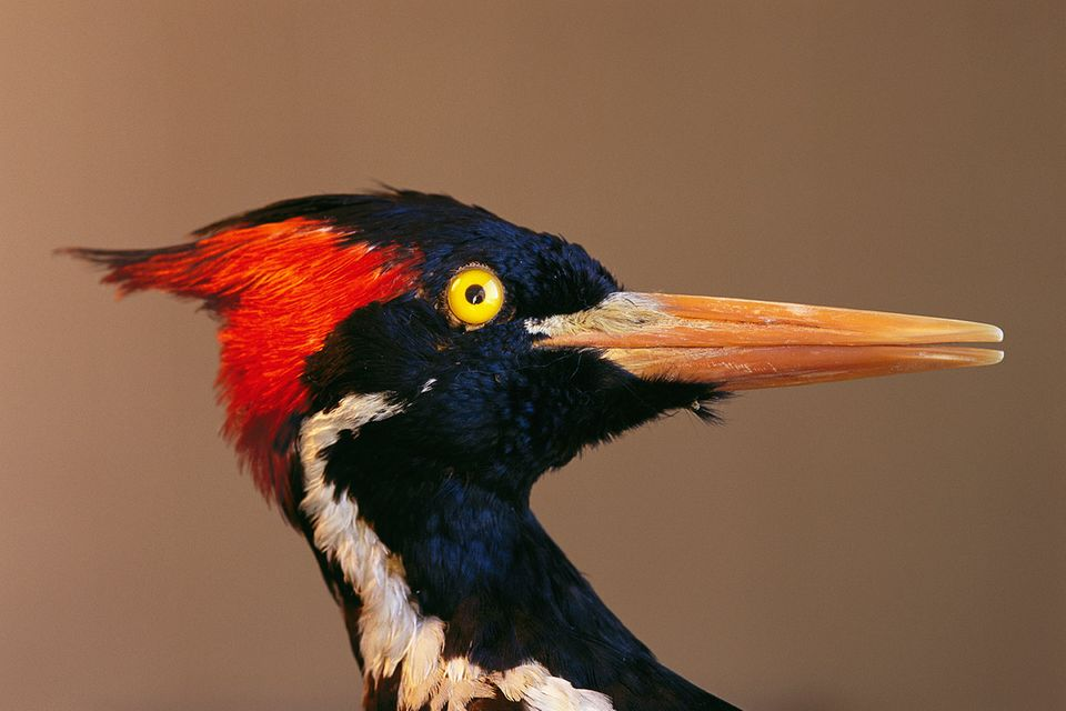 Biodiversität: Vom Verschwinden der Arten