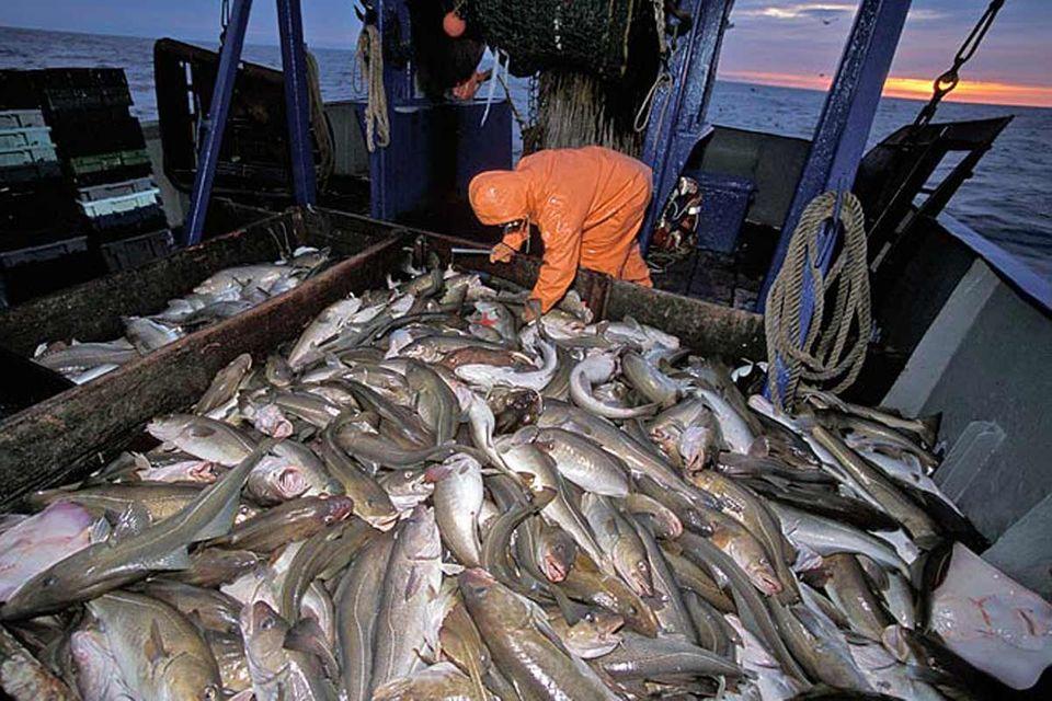 EU-Fischerei: Fischereipolitik in der Krise