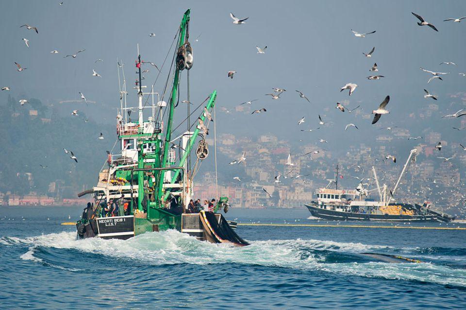 EU-Fischerei: Zwei von 83.000: Fischereiboote gibt es in der EU zu viele - ein Grund, warum die Bestände angegriffen sind. Die EU-Kommission will das mit der aktuellen Reform ändern
