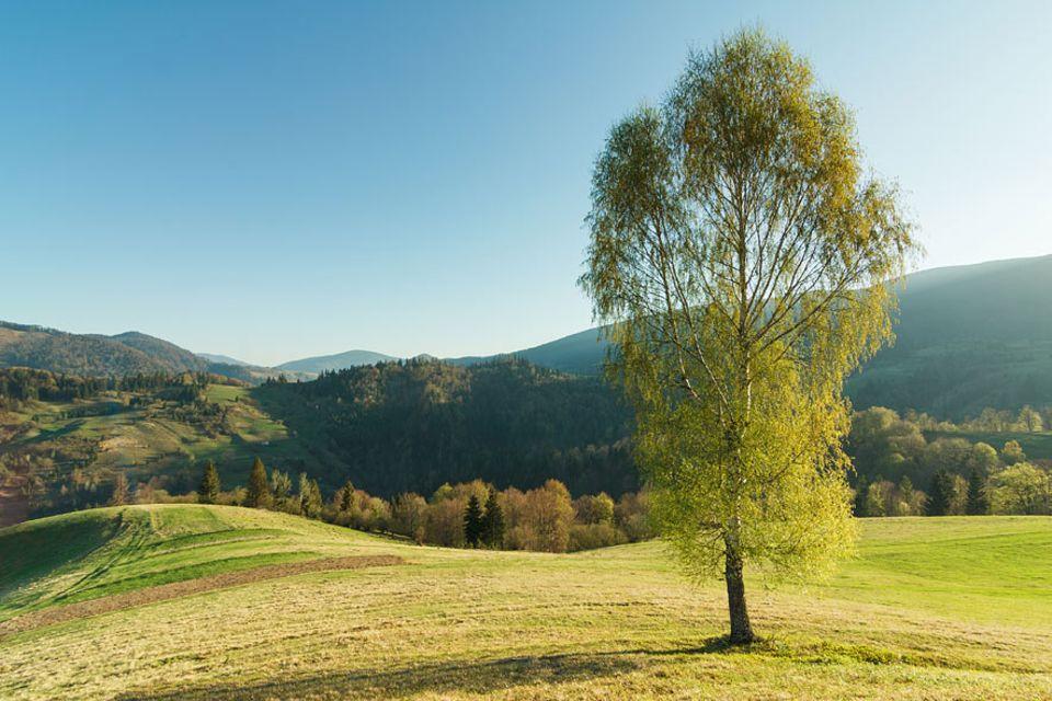 Fotoschule: Mit dem Goldenen Schnitt gelingt jedes Landschaftsbild