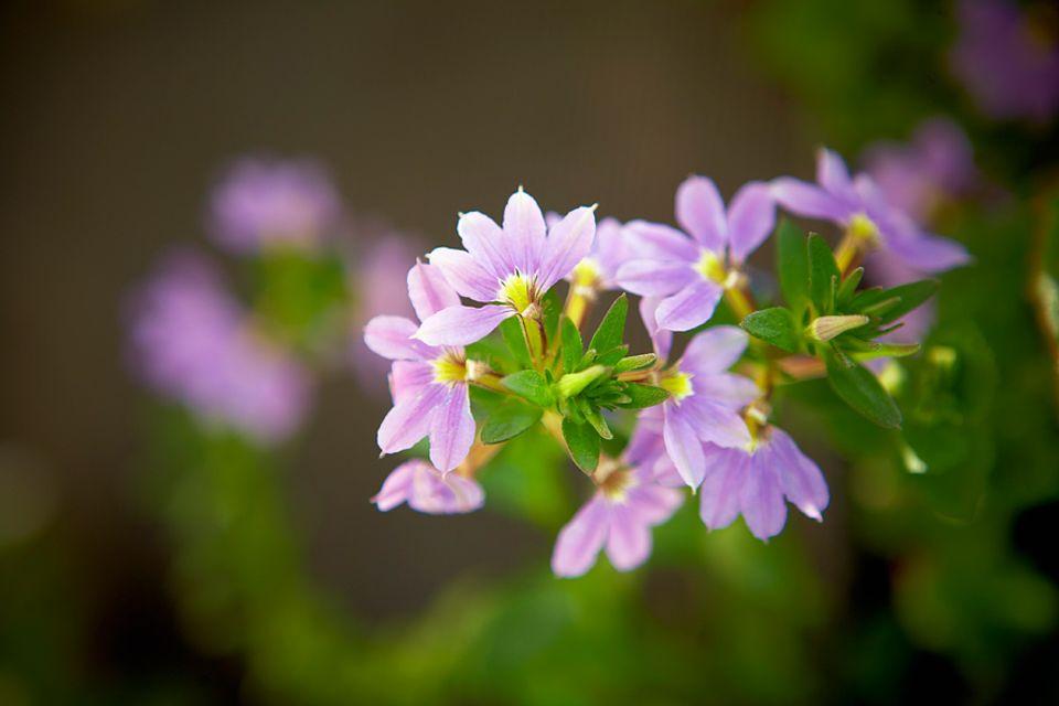 Fotoschule: Mit der Makro-Funktion lassen sich einzelne Pflanzen hervorheben