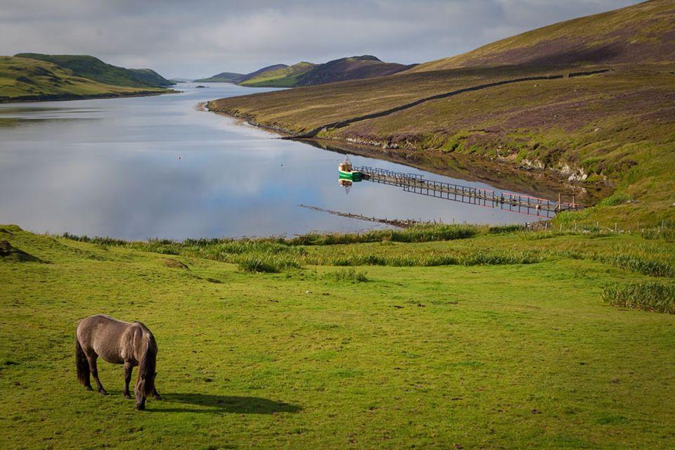 Malerisch präsentiert sich die Landschaft auf den Shetlandinseln