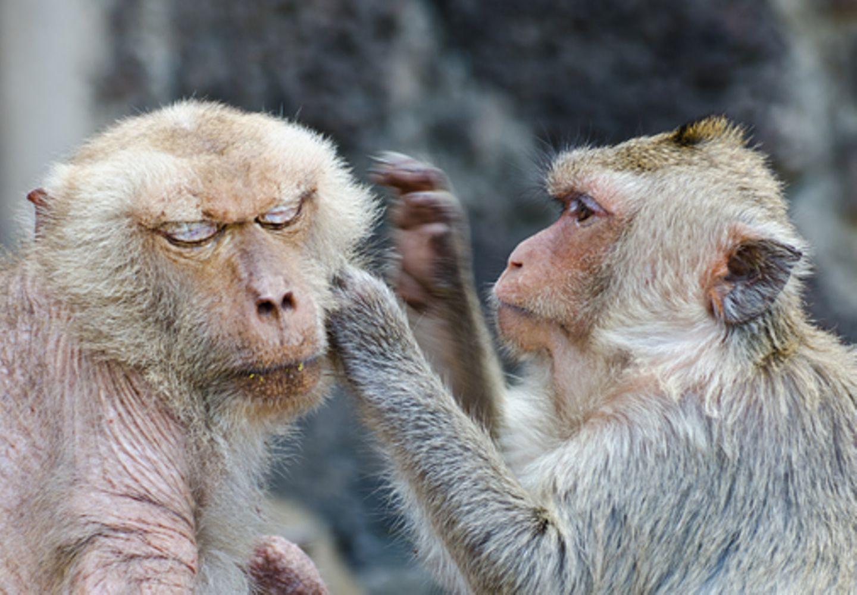 """Redewendung: Wenn jemand sagt """"mich laust der Affe"""", dann drückt das großes Erstaunen aus"""