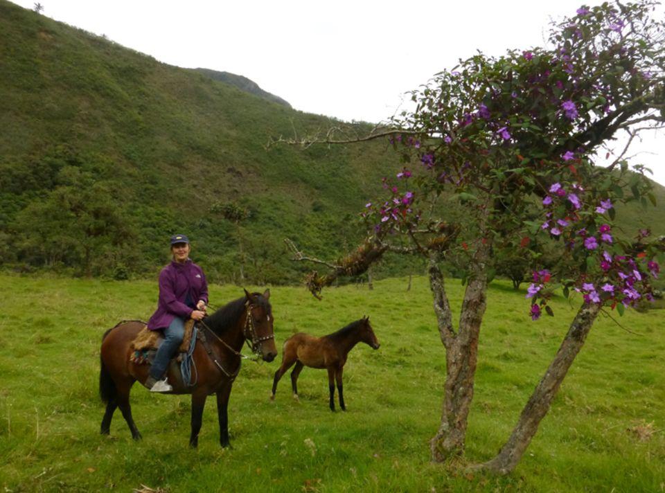 Eva Danulat zu Pferd unterwegs zu einer der Wiederauffor- stungsflächen auf rund 2700 Meter ü.d.M.
