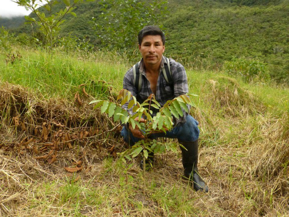 Projektbetreuer Milton Arcos mit einem kräftigen Cedro, der zwei Jahre zuvor auf der ehemaligen Weide gepflanzt worden war