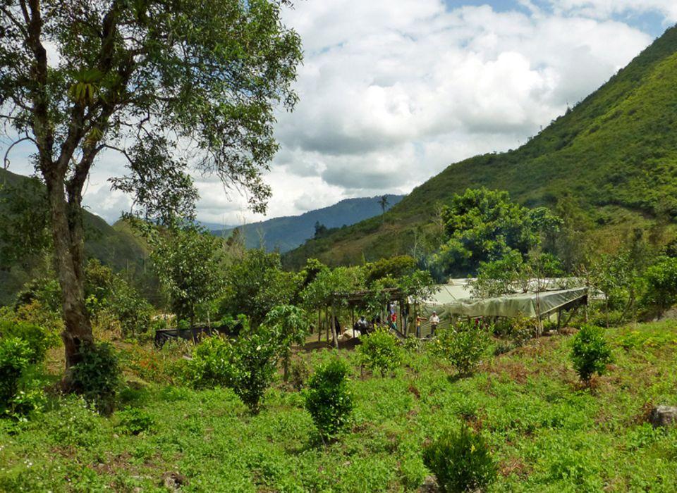 Bepflanztes Baumschulengelände im Juli 2014