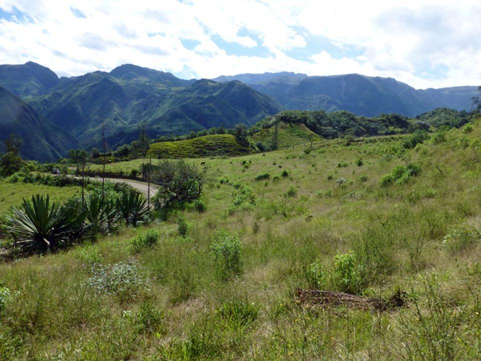 Dieses Gelände konnten die privaten Besitzer dank des Projekts mit 300 heimischen Baumsetzlingen bepflanzten