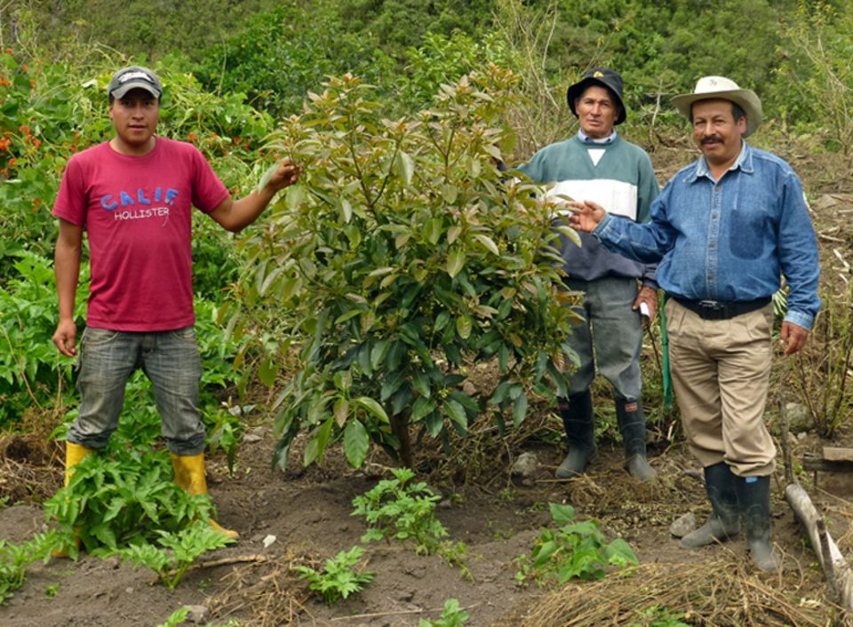 Drei der Projektbetreiber mit einem zwei Jahre zuvor gepflanzten Fruchtbaumsetzling