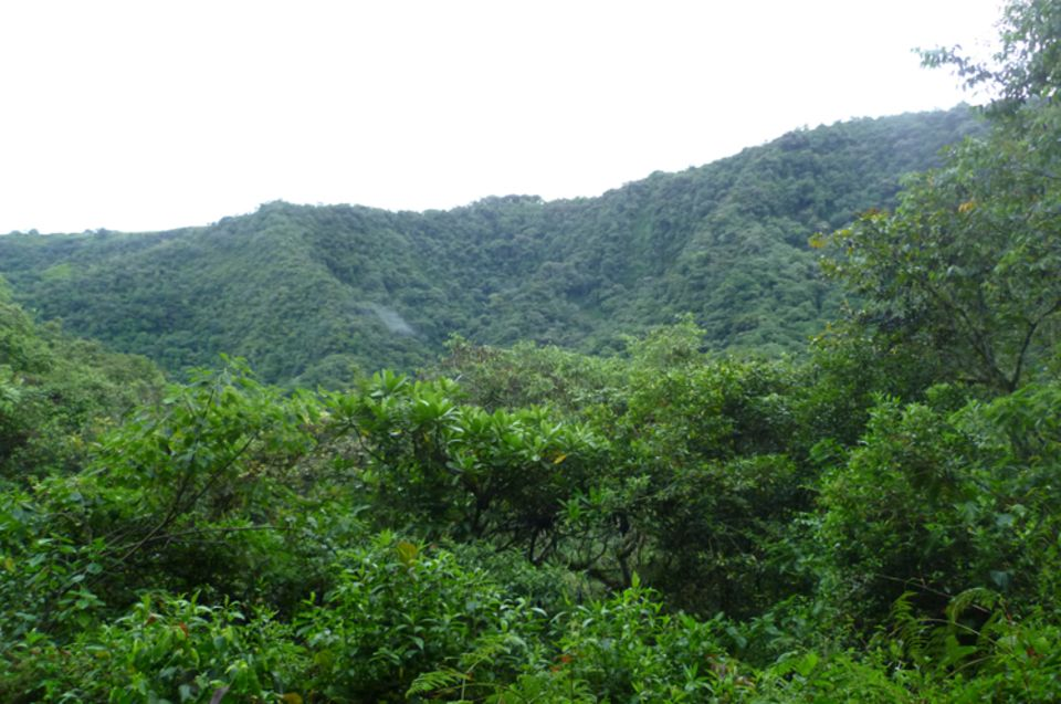 Bergregenwald bei Irubí